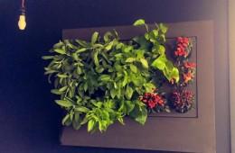 wertyklany mini ogród,
