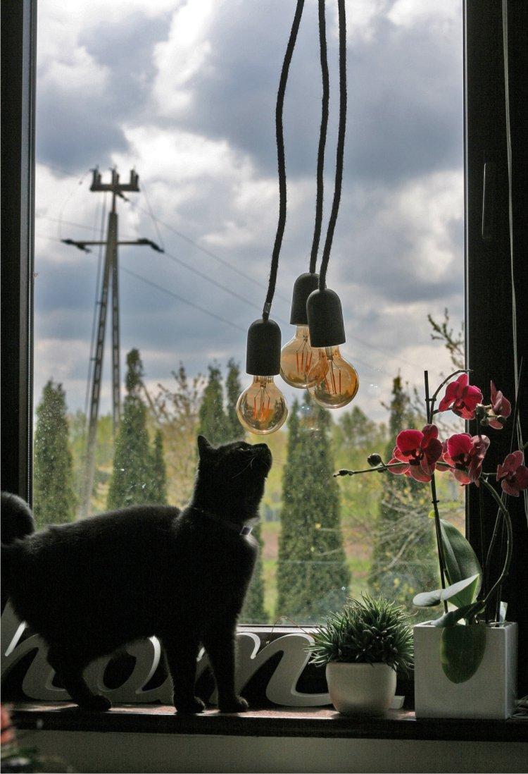 żarówki na kablach, kot, lampy
