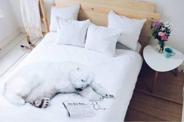pościel z misiem polarnym, sypialnia