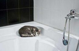 łazienka, kot leżący na wannie