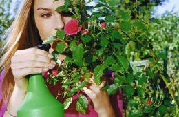 kobieta robi oprysk drzewka w ogrodzie