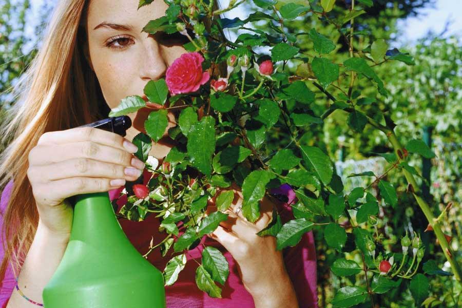 Wiosenno-letnie opryski w ogrodzie?