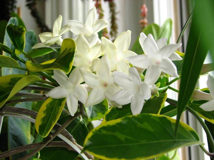 Kwiaty Doniczkowe Najpiękniejsze Rośliny Do Domu I Mieszkania